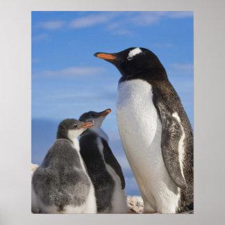 La Antártida, ensenada de Neko (puerto). Pingüino  Póster