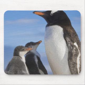 La Antártida, ensenada de Neko (puerto). Pingüino  Alfombrilla De Raton