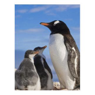 La Antártida, ensenada de Neko (puerto). Pingüino Tarjetas Postales