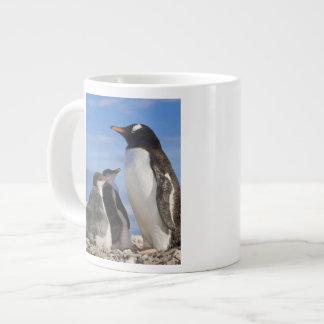 La Antártida, ensenada de Neko (puerto). Pingüino Taza Grande