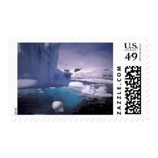La Antártida. Icescapes antárticos 2 Sellos