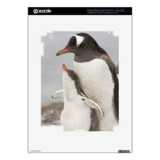 La Antártida, isla de Aitcho. Polluelo del Pegatina Skin Para iPad 3