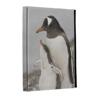La Antártida, isla de Aitcho. Polluelo del pingüin