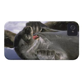 La Antártida, isla de Nelson. Sello meridional de iPhone 4 Case-Mate Protector