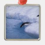 La Antártida, isla de Paulet. Zambullida de los pi Ornamentos Para Reyes Magos