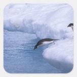 La Antártida, isla de Paulet. Zambullida de los pi Pegatinas Cuadradases