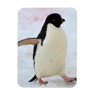 La Antártida. Isla de Petermann. Pingüino de Rectangle Magnet