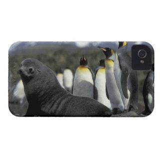 La Antártida, isla del sur de Georgia. Piel Case-Mate iPhone 4 Cobertura