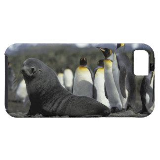 La Antártida, isla del sur de Georgia. Piel iPhone 5 Carcasas