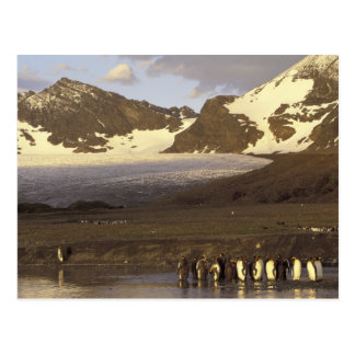 La Antártida isla del sur de Georgia Pingüinos d Postales