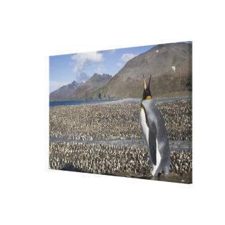 La Antártida, isla del sur de Georgia (Reino Impresión En Lona