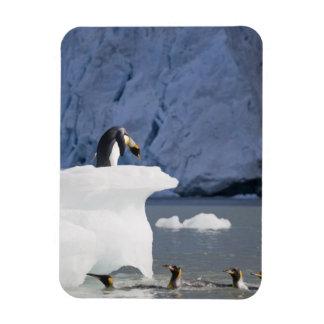 La Antártida, isla del sur de Georgia (Reino Unido Imán Foto Rectangular