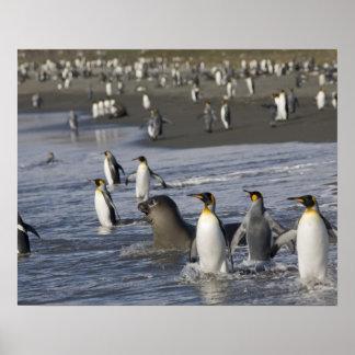 La Antártida, isla del sur de Georgia (Reino Unido Posters