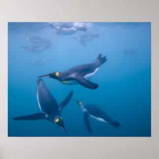La Antártida, isla del sur de Georgia (Reino Unido Póster