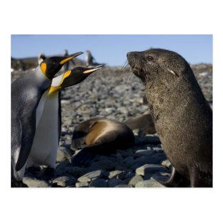 La Antártida isla del sur de Georgia Reino Unido Tarjetas Postales