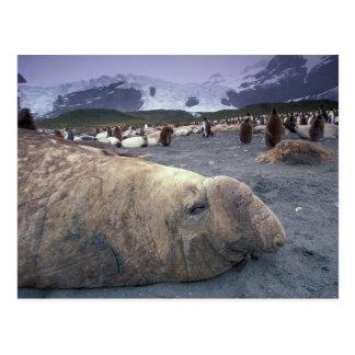 La Antártida, isla del sur de Georgia, sello de el Postales