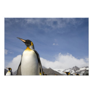 La Antártida, isla del sur Reino Unido de Georgia) Cojinete