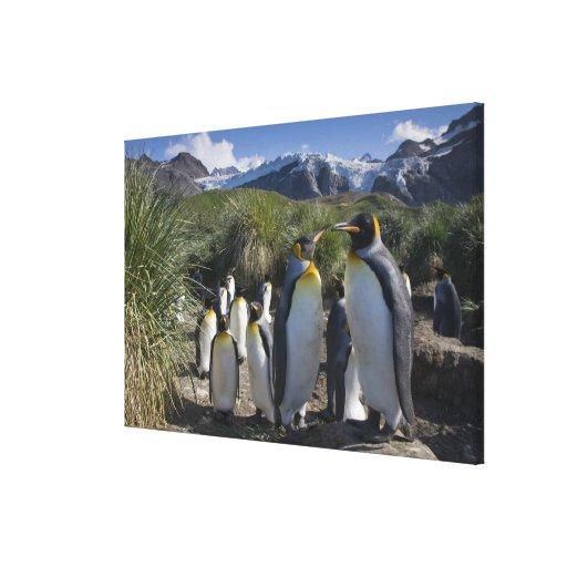 La Antártida, isla del sur Reino Unido de Georgia) Lienzo Envuelto Para Galerías