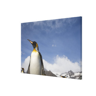 La Antártida, isla del sur Reino Unido de Georgia) Lona Estirada Galerías