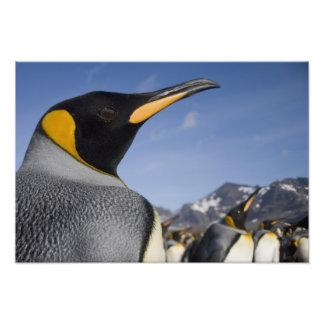 La Antártida, isla del sur Reino Unido de Georgia) Foto