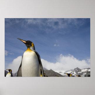 La Antártida, isla del sur Reino Unido de Georgia) Póster