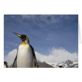 La Antártida, isla del sur Reino Unido de Georgia) Tarjeta De Felicitación