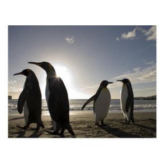 La Antártida, isla del sur Reino Unido de Georgia) Tarjetas Postales