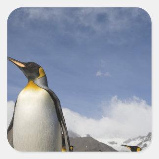 La Antártida, isla del sur Reino Unido de Colcomanias Cuadradases
