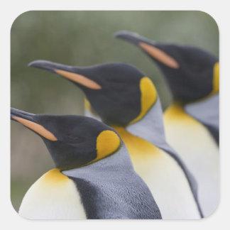 La Antártida, isla del sur Reino Unido de Pegatina Cuadrada