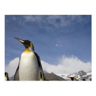 La Antártida, isla del sur Reino Unido de Postales