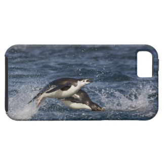 La Antártida, Islas Shetland del sur, Gourdon iPhone 5 Carcasa