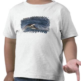La Antártida, Islas Shetland del sur, Gourdon Camisetas