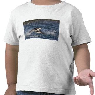 La Antártida, Islas Shetland del sur, Gourdon Camiseta