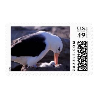 La Antártida, islas Sub-Antárticas, 4 del sur Timbres Postales