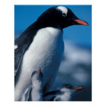 La Antártida, islas Sub-Antárticas, del sur Posters