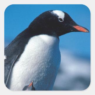 La Antártida, islas Sub-Antárticas, del sur Calcomanía Cuadrada