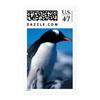 La Antártida, islas Sub-Antárticas, del sur Sellos