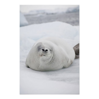 La Antártida, península antártica, antártica Arte Con Fotos
