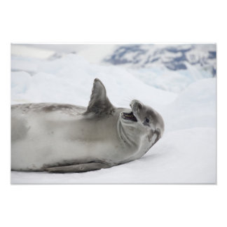 La Antártida, península antártica, antártica Fotografía