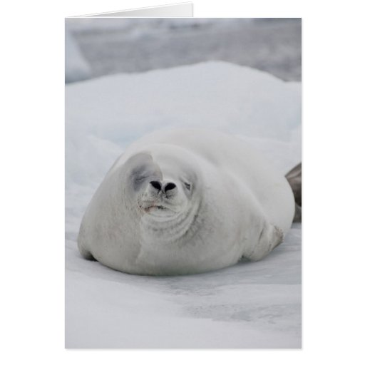 La Antártida, península antártica, antártica Tarjeta De Felicitación