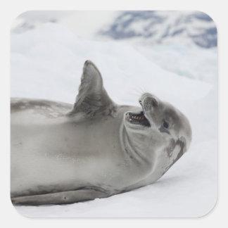 La Antártida península antártica antártico 2 Pegatina