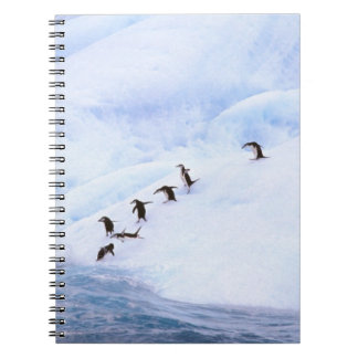 La Antártida, península antártica. Chinstrap Libreta
