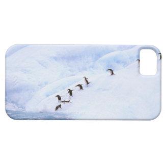 La Antártida, península antártica. Chinstrap iPhone 5 Case-Mate Protectores