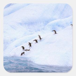 La Antártida, península antártica. Chinstrap Calcomanías Cuadradas