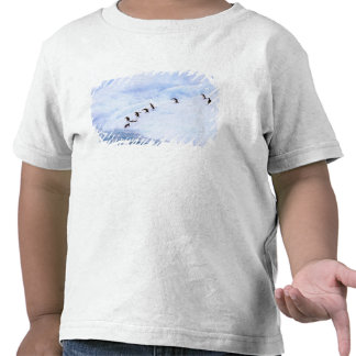 La Antártida, península antártica. Chinstrap Camisetas