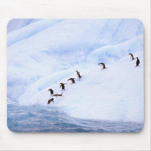 La Antártida, península antártica. Chinstrap Alfombrilla De Raton