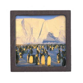 La Antártida península antártica mar de Weddell Cajas De Regalo De Calidad
