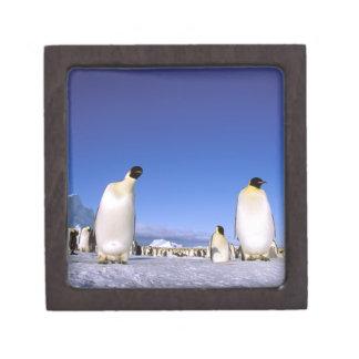 La Antártida península antártica mar de Weddell Caja De Joyas De Calidad