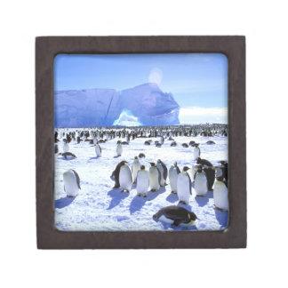 La Antártida península antártica mar de Weddell Caja De Regalo De Calidad