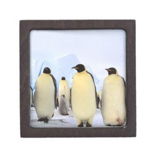 La Antártida península antártica mar de Weddell Cajas De Recuerdo De Calidad